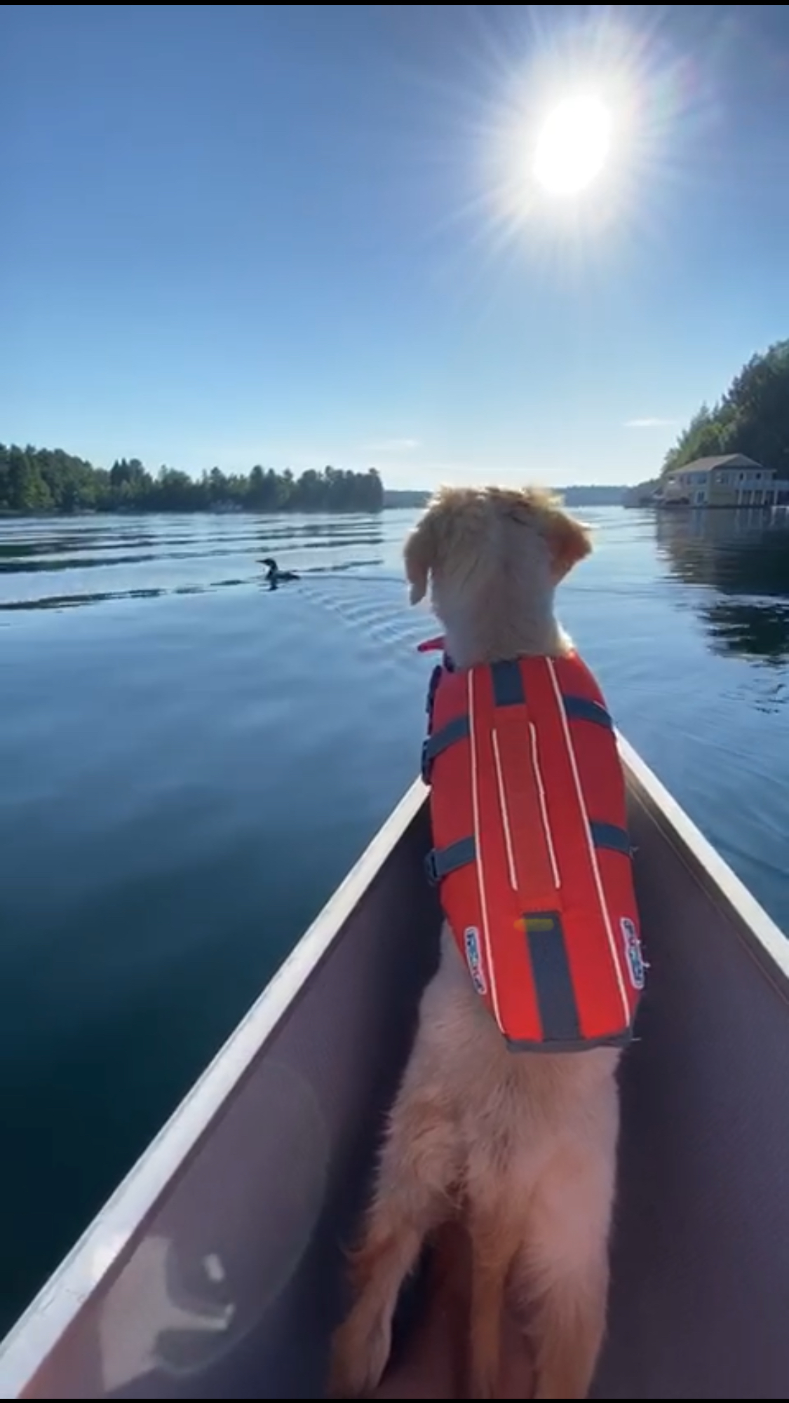Image of a dog in a Canoe
