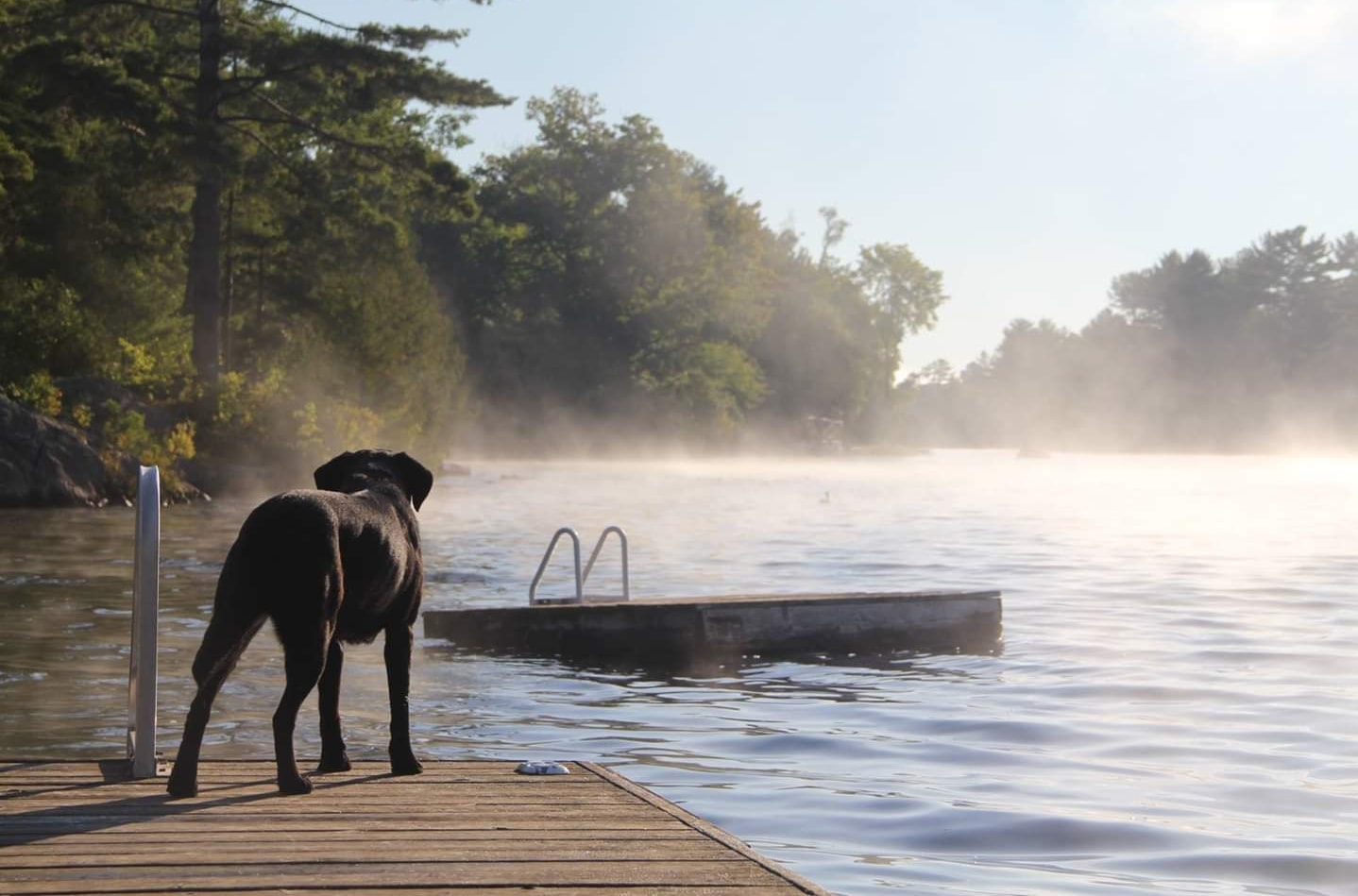 Image of a dog on a dock